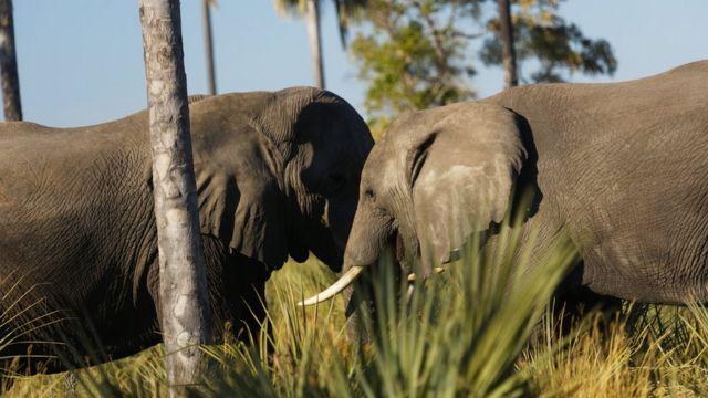 ช้าง 2 ตัว