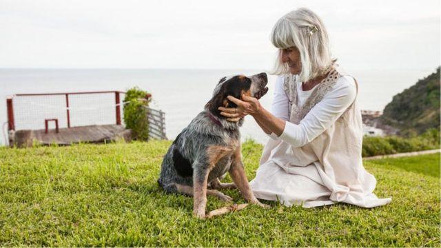 对狗的寿命的新研究认为,宠物犬进入犬类中年期的時候遠比其大多數狗主人所想的要快得多。