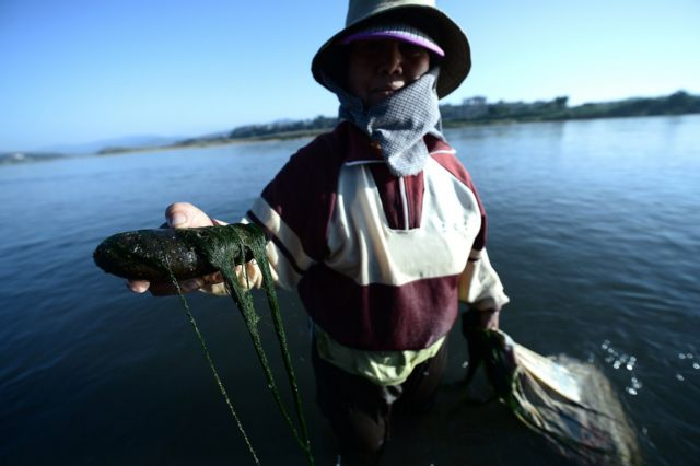 แม่น้ำโขง, กรอบความร่วมมือการประชุมแม่น้ำล้านช้าง-โขง, คณะกรรมาธิการลุ่มแม่น้ำโขง, MRC, หวัง อี้, กระทรวงการต่างประเทศจีน, ไก, สาหร่ายน้ำจืด, เชียงของ, เชียงราย, ผลกระทบ, เขื่อน, มณฑลยูนนาน, แม่น้ำล้านช้าง, สำนักเลาขาธิการความร่วมมือแม่น้ำล้านช้าง-โขง