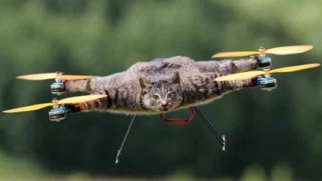 Oville, el gato volador