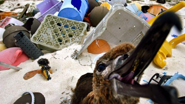 Imagem mostra ave cercada por lixo de plástico