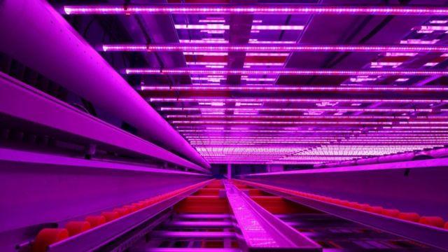 Infraestructura de una granja vertical
