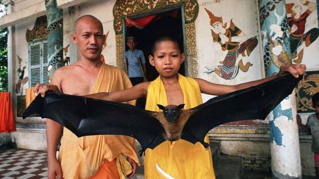 Un monje enseña un murciélago