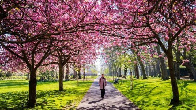 Una mujer camina por un sendero de un parque