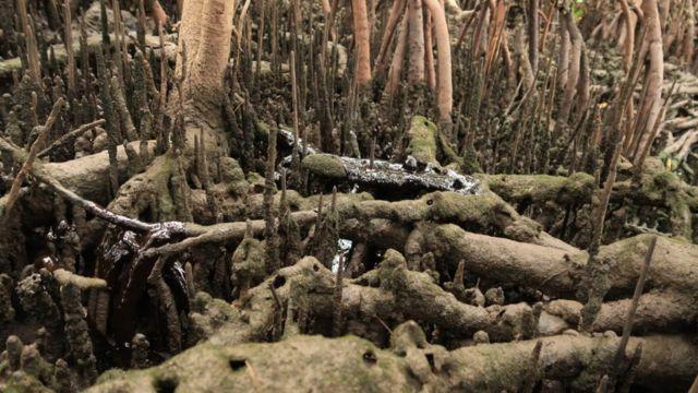 Petróleo no rio Massangana, Suape