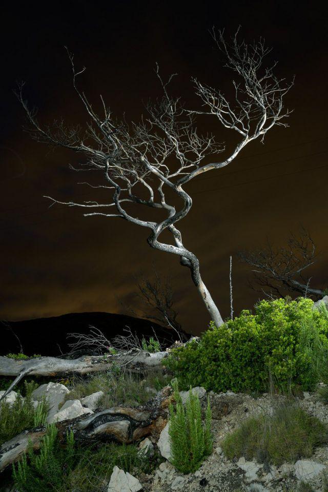 спотворений стовбур дерева