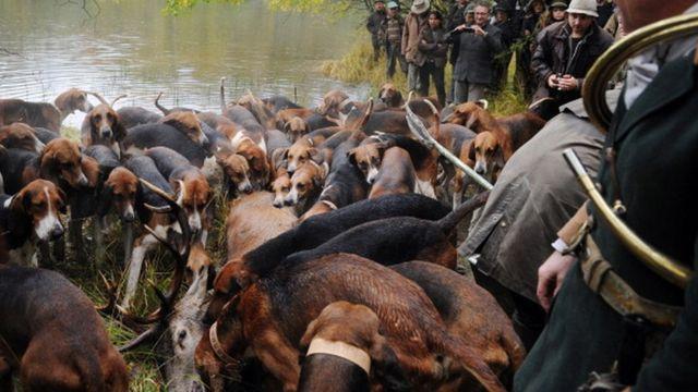 การล่ากวางในฝรั่งเศส ซึ่งเป็นประเพณีสืบทอดกันมา มีการใช้สุนัขและม้าเข้าร่วมในการล่าด้วย