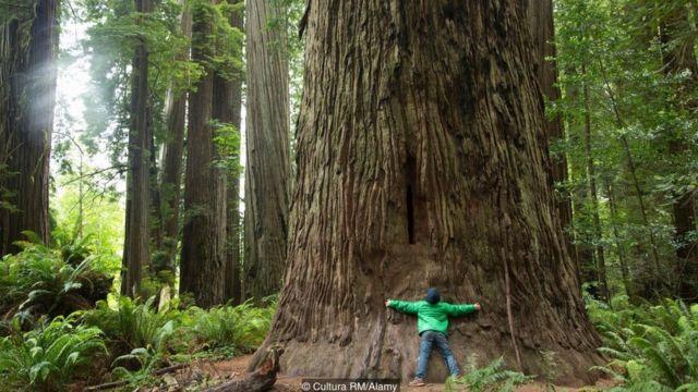 Pessoa abraçando árvore