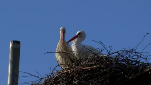 The two storks