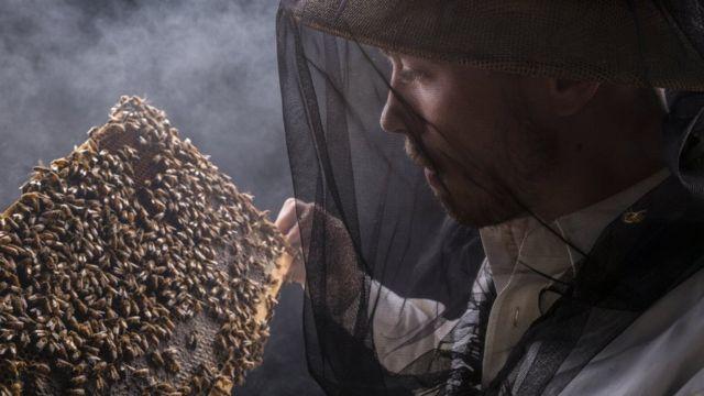 Пчеловод рассматривает часть улия