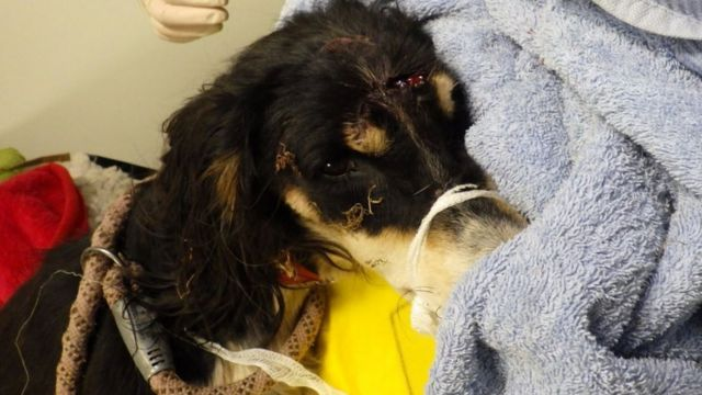 Owner 'tried to finish off' dog dumped near Bewdley
