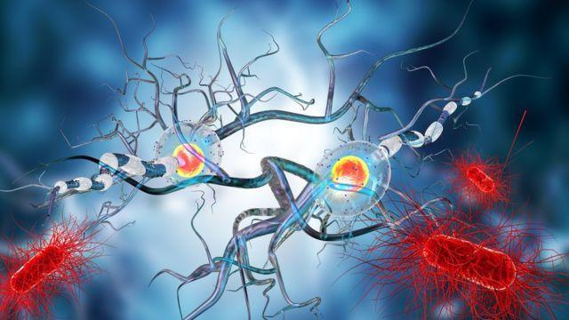 Нервные клетки в человеческом мозге