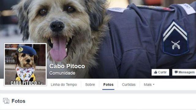 Página do cachorro Cabo Pitoco no Facebook tem mais de 110 mil seguidores