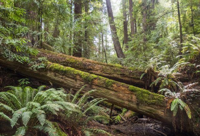 árbol caído en bosque