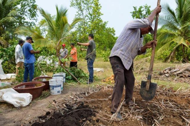 Centroamericanos trabajando en el programa Sembrando Vida