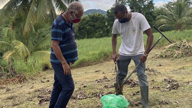 Exploración de clordecona en Martinica.