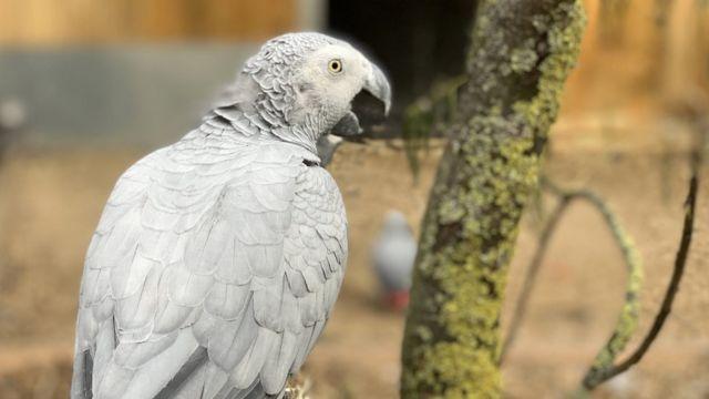 Попугай жако (фото предоставлено зоопарком)