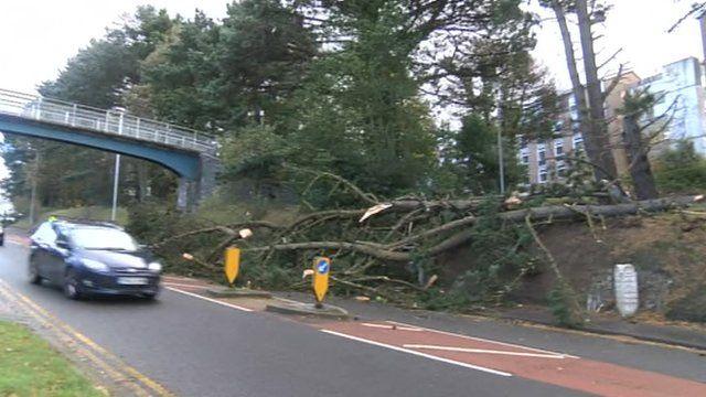 A fallen tree blocks one lane of the road on Penglais Hill