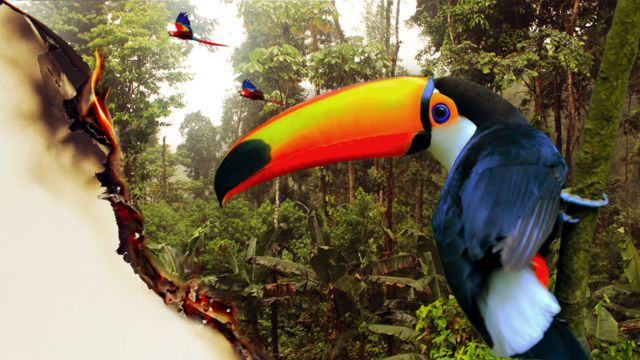 Tucán en el Amazonas