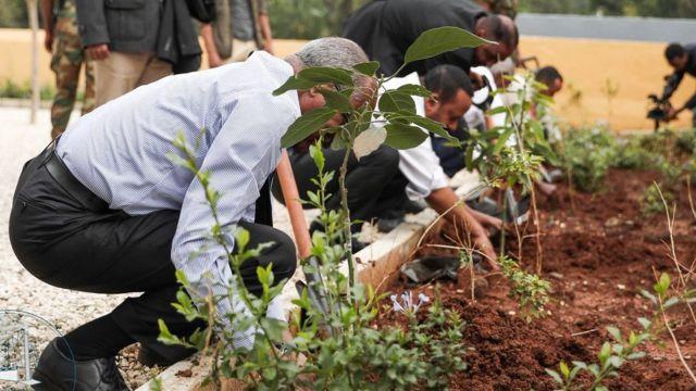 Plantação de mudas de árvores