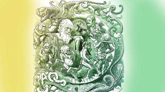 Darwin e ilustração sobre a evolução