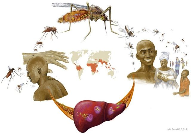 Malaria, Illustration, Countries Of Africa, Asia And Latin America.