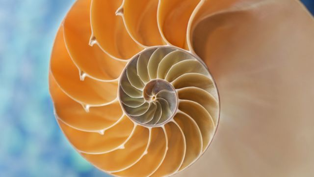 Interior de un caracol