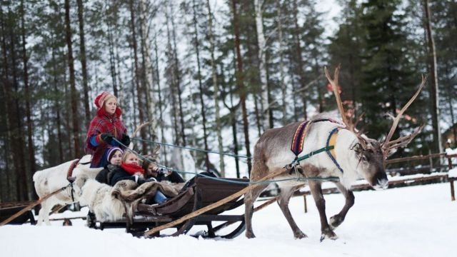 Mujer de Laponia paseando a turistas en un carro tirado por un reno.