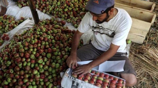 सेब कारोबारी