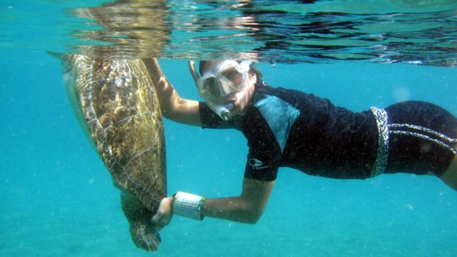 Pesquisadora Maira Carneiro Proietti com tartaruga na água