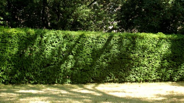 Cities need 'hedges as well as trees' for environment