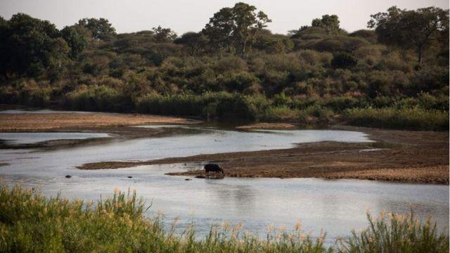 Les niveaux d'eau de la rivière Sabie sont en baisse à cause de la diminution des précipitations.