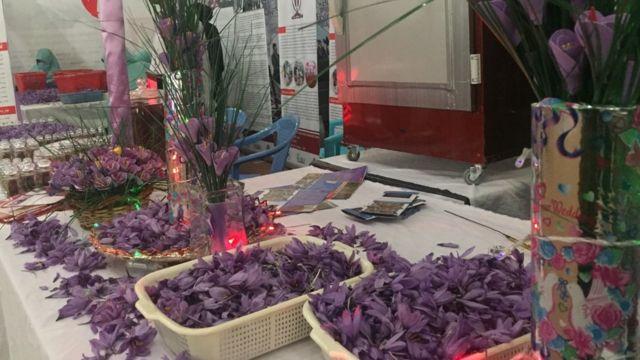 جشنواره گل زعفران