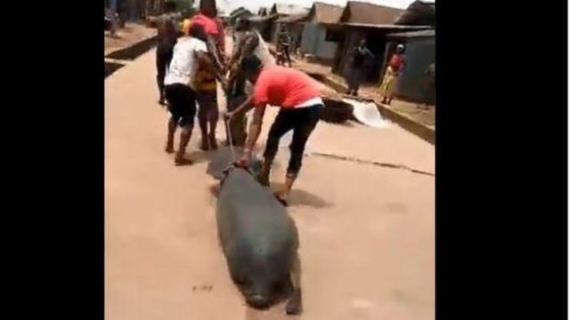 Area boys wey gbab Sea Lion for Burutu Delta State don enta 'hot pepper soup'