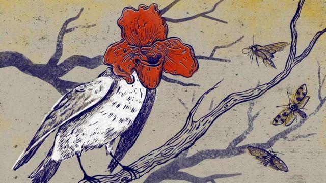 Ilustração de pássado com cara de flor