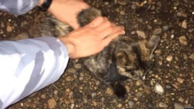 A cat being held down