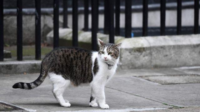 英国首相府唐宁街10号的大猫拉里