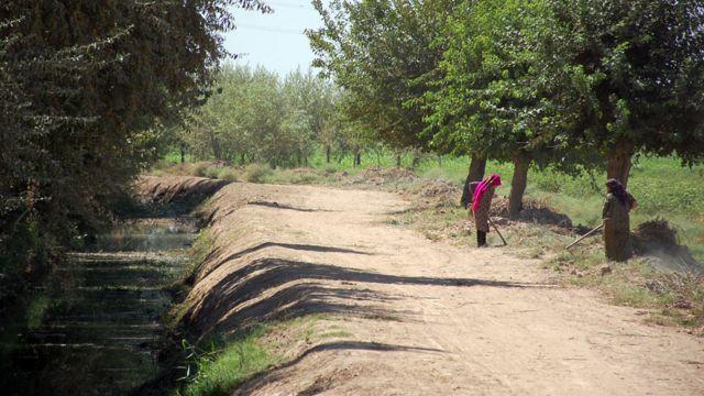 زنان و آبیاری مشارکتی