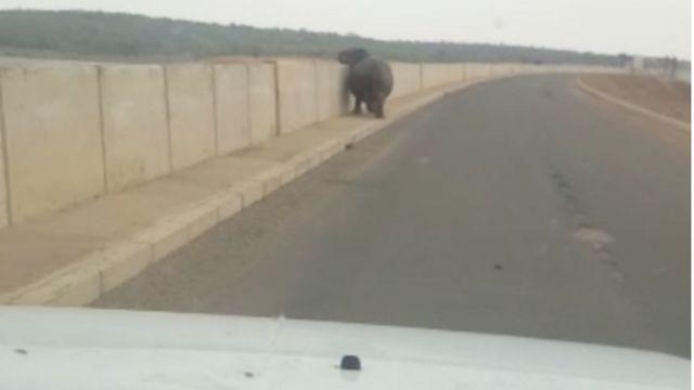L'hippopotame agressif se pomenait près d'un pont situé dans le célèbre parc national Kruger.