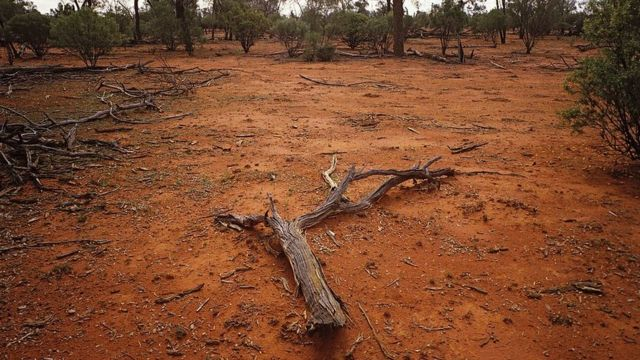 Ovako izgleda uništeno zemljište zbog prevelikog uzgoja stoke u Australiji