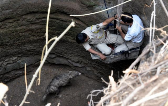 Forest officers rescue a hyena stuck in a well in 2013 in Nashik's Yevala village