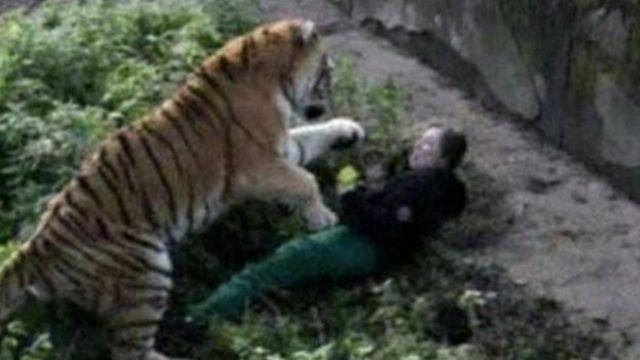 Di tiger dey bite di zoo worker.