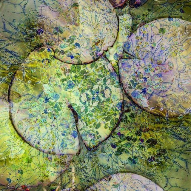 Cathryn Baldock memenangkan kategori abstrak dengan menumpuk bunga lili untuk menunjukkan keindahannya.