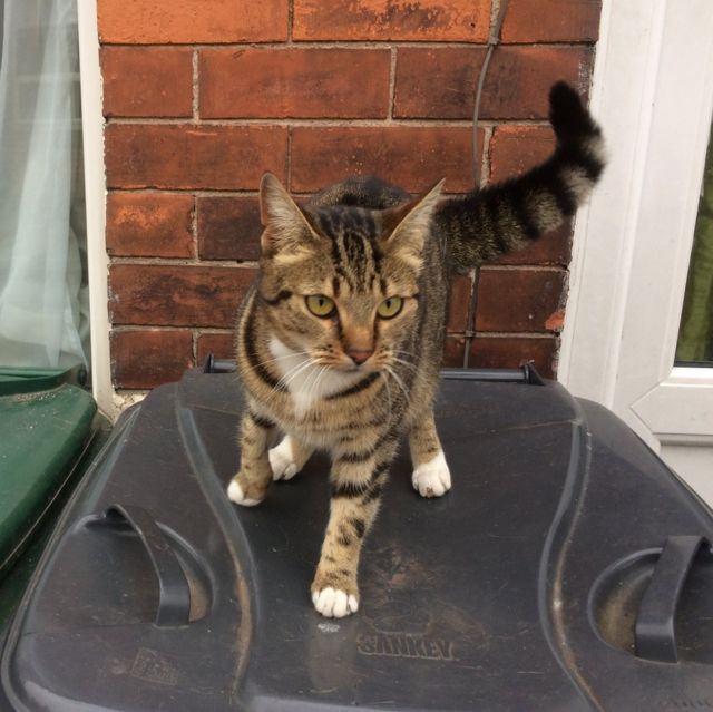 Netherfield Co-op cat 'tricks' shoppers to get more food