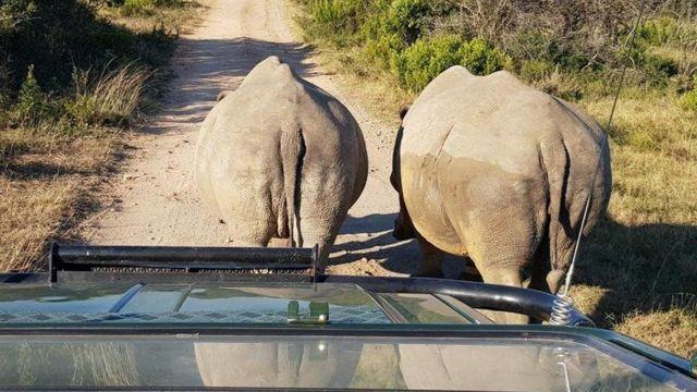지난 10년간 남아공에서만 밀렵으로 약 7000마리의 코뿔소가 사라졌다