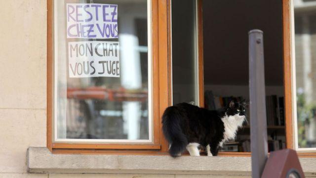 Кот на подоконнике в Париже