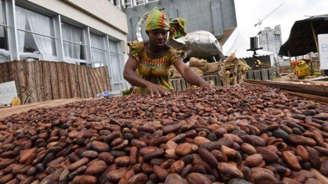 Une femme recueille du cacao