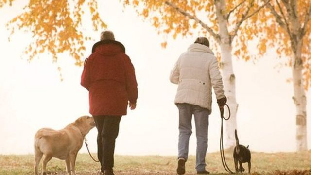 两位老人与狗在阳光森林