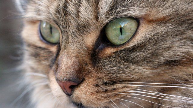 Close-up of the face of a cat