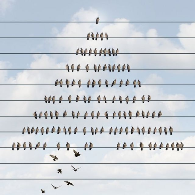 Aves sobre unos cables